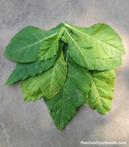 cig_leaves